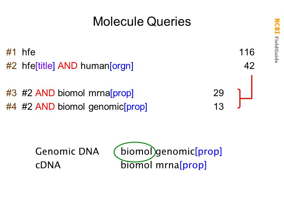 Molecule Queries #1 hfe 116 #2 hfe[title] AND human[orgn] 42
